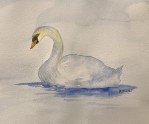 Swan - a reflection